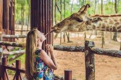 Gelukkige jonge vrouwen lettende op en voedende giraf in dierentuin Gelukkig u royalty-vrije stock afbeeldingen