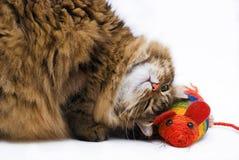 Gelukkige kat liyng naast de muis Royalty-vrije Stock Afbeelding