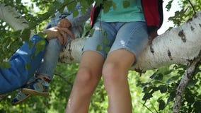 Gelukkige kinderen die op de tak van een berk slingeren stock footage