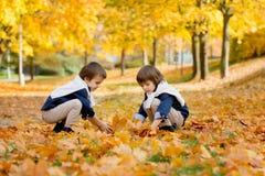 Gelukkige kinderen, jongensbroers, die in het park spelen, die leav werpen Stock Foto