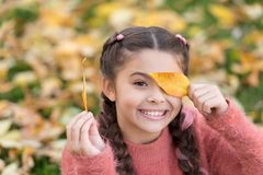 Gelukkige kinderjaren De tijd van de school Klein kind met de herfstbladeren Gelukkig meisje in bladeren van de de herfst de bosh royalty-vrije stock afbeelding