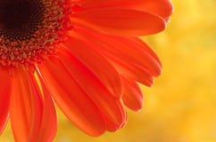 Gelukkige kleuren! Stock Afbeelding