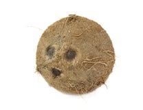 Gelukkige kokosnoot royalty-vrije stock afbeeldingen