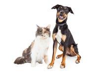 Gelukkige Kruisingshond en Mooie Calicokat Royalty-vrije Stock Foto