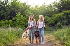 Gelukkige lachende jonge vrouwen die hun honden lopen stock foto's