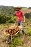 Gelukkige landbouwer die zijn opbrengst van maniok op een zonnige dag tonen Stock Foto