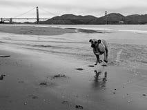 Gelukkige lopende hond met alle paren in de lucht die over het bespatten van water verzenden royalty-vrije stock afbeeldingen
