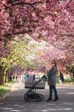 Gelukkige mammagang met haar weinig babymeisje in wandelwagen Achtergrond van roze sakuraboom stock foto