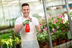 Gelukkige meest florest het water geven bloem in serre Stock Foto