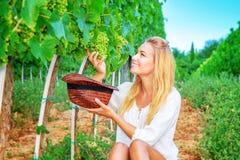 Gelukkige meisje het plukken druiven stock fotografie