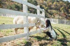 Gelukkige meisje het voeden schapenboerderij in Zuid-Korea Stock Foto