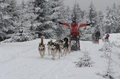 gelukkige musher en zijn hond die Siberische Huskies sledding Royalty-vrije Stock Afbeelding