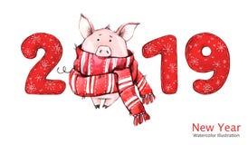 2019 Gelukkige Nieuwjaarbanner Leuk varken in de wintersjaal met aantallen De illustratie van de waterverf Symbool van de winterv stock foto's