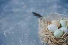 Gelukkige Pasen Paaseieren in nest met Pasen-decoratie, exemplaarruimte Stock Afbeeldingen