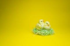 Gelukkige Pasen Porseleinkuikens in vogelnest Royalty-vrije Stock Afbeelding