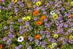 Gelukkige purpere, gele en oranje wildflowers stock foto's