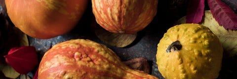 Gelukkige thanksging banner Selectie van diverse pompoenen op donkere metaalachtergrond Autumn Harvest en Vakantie stilleven stock foto