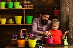 gelukkige tuinlieden met de lentebloemen Bloemzorg het water geven Grondmeststoffen Familiedag serre Gebaarde mens en stock afbeeldingen