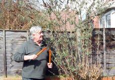 Gelukkige tuinman die een struik snoeien. Stock Afbeeldingen