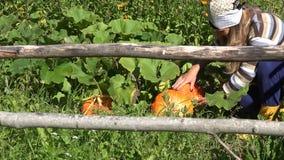 Gelukkige tuinmanvrouw met headscarf het groeien pompoen plantaardige installaties voor Halloween-dag 4K stock videobeelden
