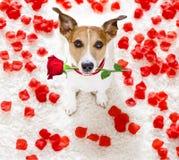 Gelukkige valentijnskaartenhond Stock Foto