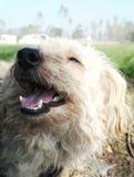 Gelukkige verdwaalde hond 2 Stock Afbeeldingen