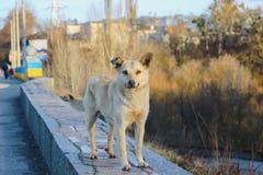Gelukkige verdwaalde hond bij straat Royalty-vrije Stock Foto