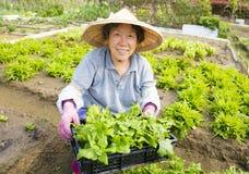 Gelukkige vrouwelijke Hogere landbouwer die in groentenlandbouwbedrijf werken Stock Afbeelding