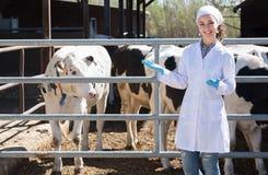 Gelukkige vrouwendierenarts die zich gelukkig dicht bij koeien bevinden Royalty-vrije Stock Foto
