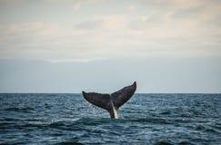 Gelukkige walvisstaart royalty-vrije stock afbeelding