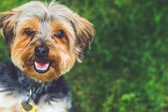 Gelukkigste Leukste Puppy rond stock foto