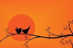 Gelukvogels op boomtak tijdens zonsondergang Stock Afbeelding