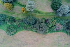 Gemähte Wiese mit Reihe von Büschen und von Bäumen von der Luft Stockfotografie