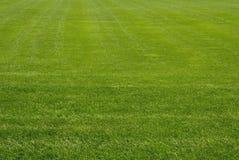 Gemähter Rasen Stockbild