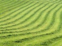 Gemähter Rasen mit Zeilen 2 stockbilder