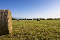 Gemähtes Gras stockfotos