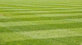 Gemähtes Gras-Feld Lizenzfreie Stockfotos