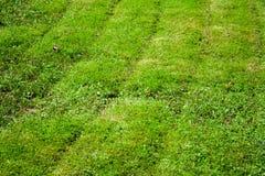 Gemähtes Gras Hintergrund, Natur Lizenzfreie Stockfotografie