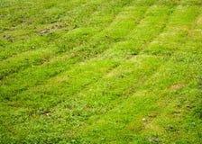 Gemähtes Gras Hintergrund, Natur Stockfotos
