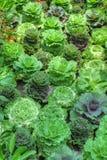 Gemüseänderung am objektprogramm Lizenzfreie Stockfotografie