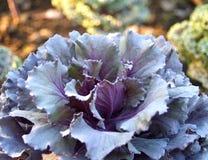 Gemüse 03 Stockfotos
