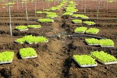 Gemüse auf Nachbarschaft von Dalat, Vietnam Stockfoto