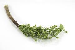 Gemüse auf weißem Hintergrund Lizenzfreie Stockfotos