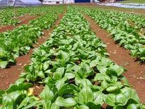 Gemüse-Bauernhof lizenzfreie stockfotografie