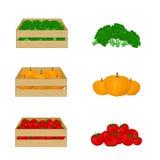 Gemüse in den Holzkisten auf weißem Hintergrund Brokkoli, Kürbis, Tomaten Illustration des biologischen Lebensmittels Frisches ve Lizenzfreie Stockfotografie