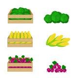 Gemüse in den Holzkisten lokalisiert auf weißem Hintergrund Stockfoto