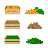 Gemüse in den Holzkisten lokalisiert auf weißem Hintergrund Karotten, Kartoffeln und Gurken Lizenzfreies Stockbild