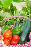 Gemüse des Gemüsegartens in einem Korb Stockfoto