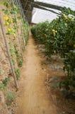 Gemüse des grünen Hauses in China Lizenzfreies Stockbild