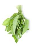 Gemüse des wilden Lauchs Lizenzfreie Stockfotos